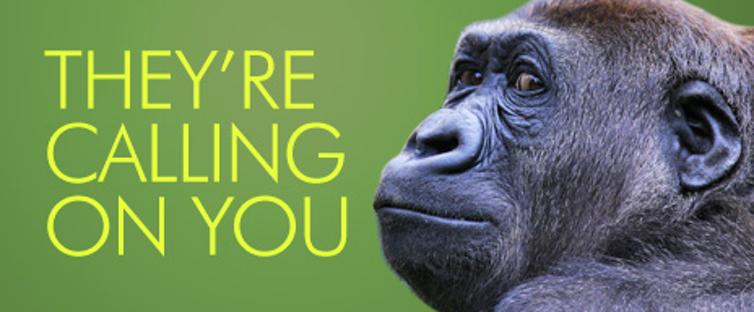 Donate phones to Taronga Zoo gorillas